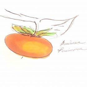 yellow orange persimmon fruit