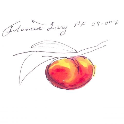one red and yellow colored peach on a tree branch