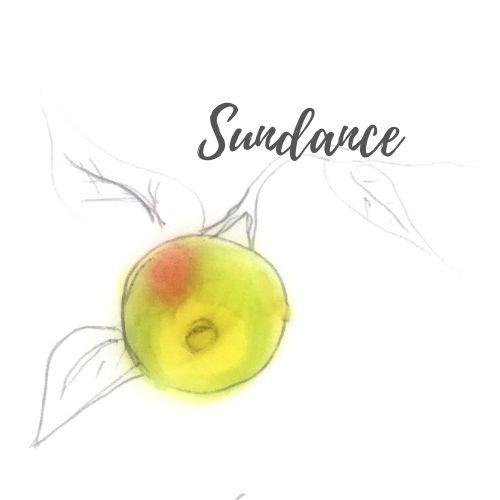 Sundance Apple Tree