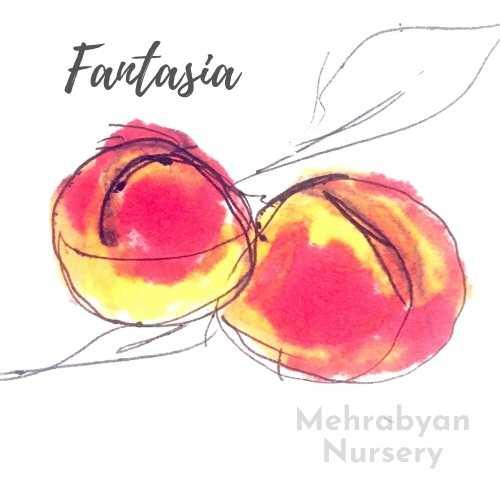 Fantasia Nectarine Tree