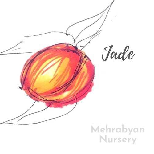 Jade Nectarine Tree