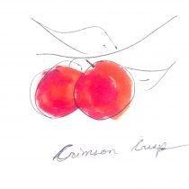 Crimson Crisp Apple Tree