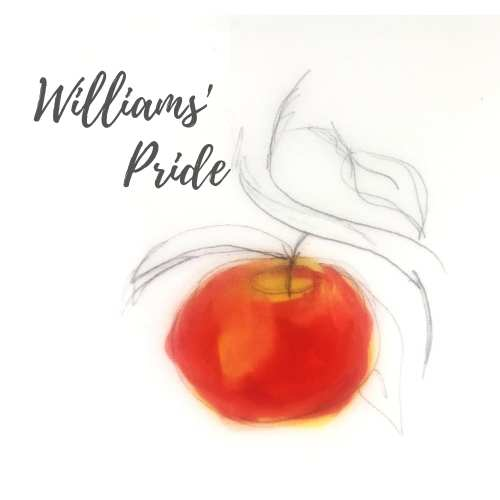 Williams' Pride Apple Tree