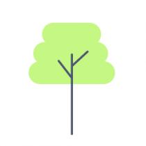Pawpaw Trees
