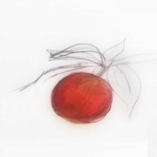 one red colored apple on a tree branch