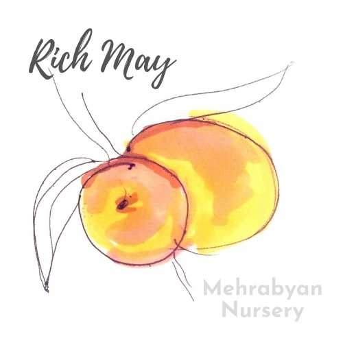 Rich May Peach Tree