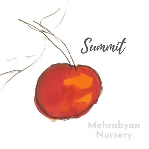 Summit cherry tree