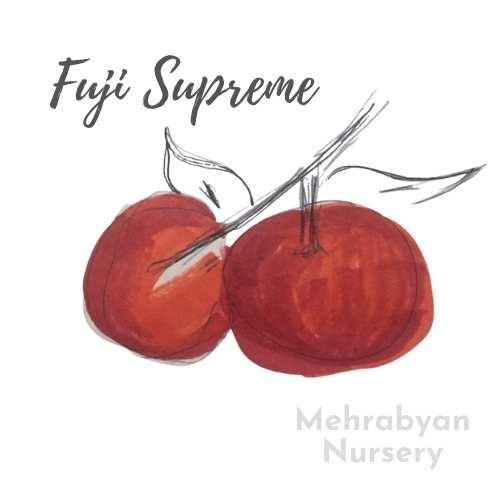 Fuji Supreme Apple Tree