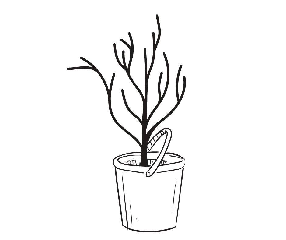 prepare tree how to plant