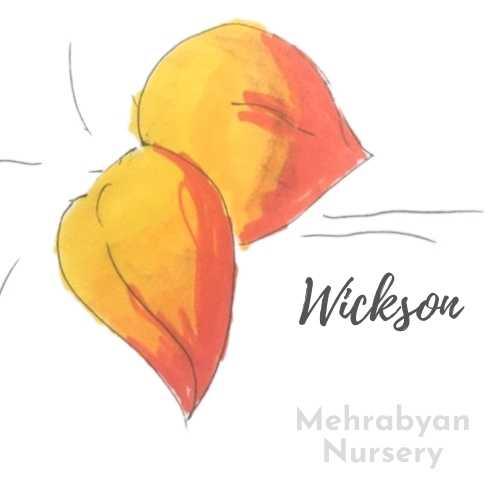 WicksonPlumTree
