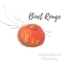 Binet Rouge Apple Tree