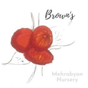 Brown's Apple Tree