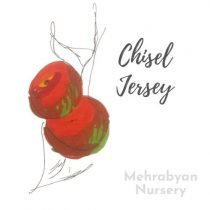 Chisel Jersey Apple Tree