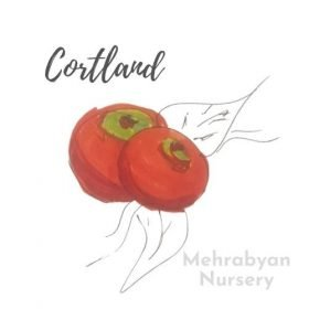 Cortland Apple Tree