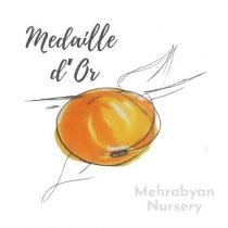 Medaille d'Or Apple Tree
