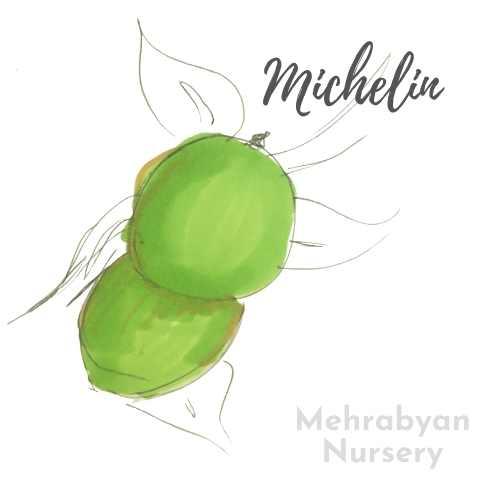 Michelin Apple Tree
