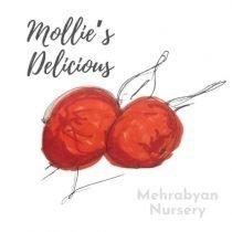 Mollie's Delicious Apple Tree