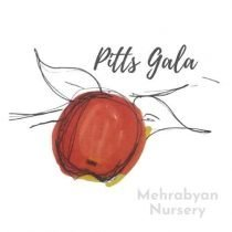 Pitts Gala Apple Tree