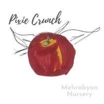 Pixie Crunch Apple Tree