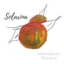 Solarina Apple Tree