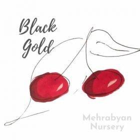 Black Gold Cherry Tree