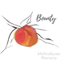 Bounty Peach Tree