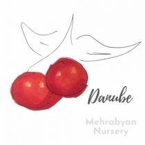 Danube Cherry Tree