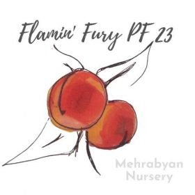 Flamin' Fury® PF 23 Peach Tree