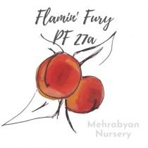 Flamin' Fury PF 27A Peach Tree