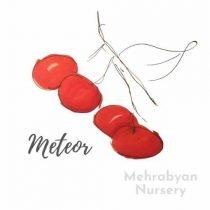 Meteor Cherry Tree