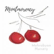 Montmorency Cherry Tree