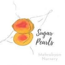 sugar pearls apricot tree