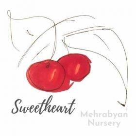 Sweetheart Cherry Tree
