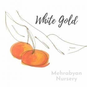 White Gold Cherry Tree