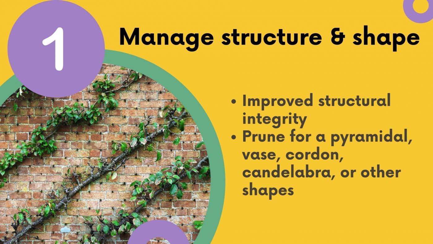 Why prune: manage structure and shape