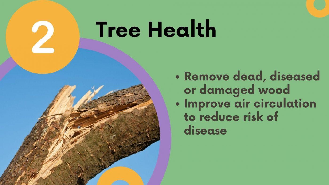 Why prune? tree health