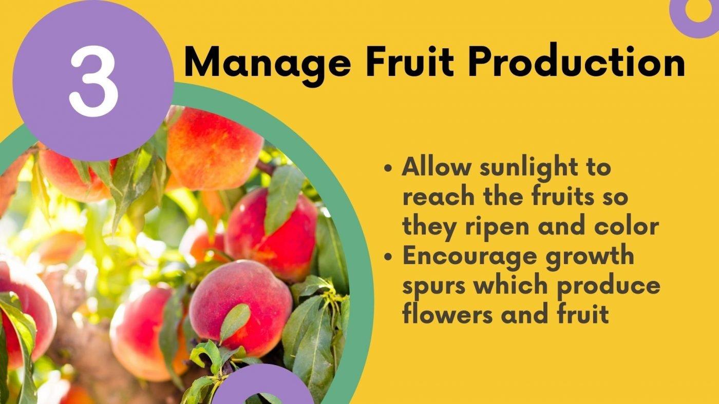 Why prune? manage fruit production