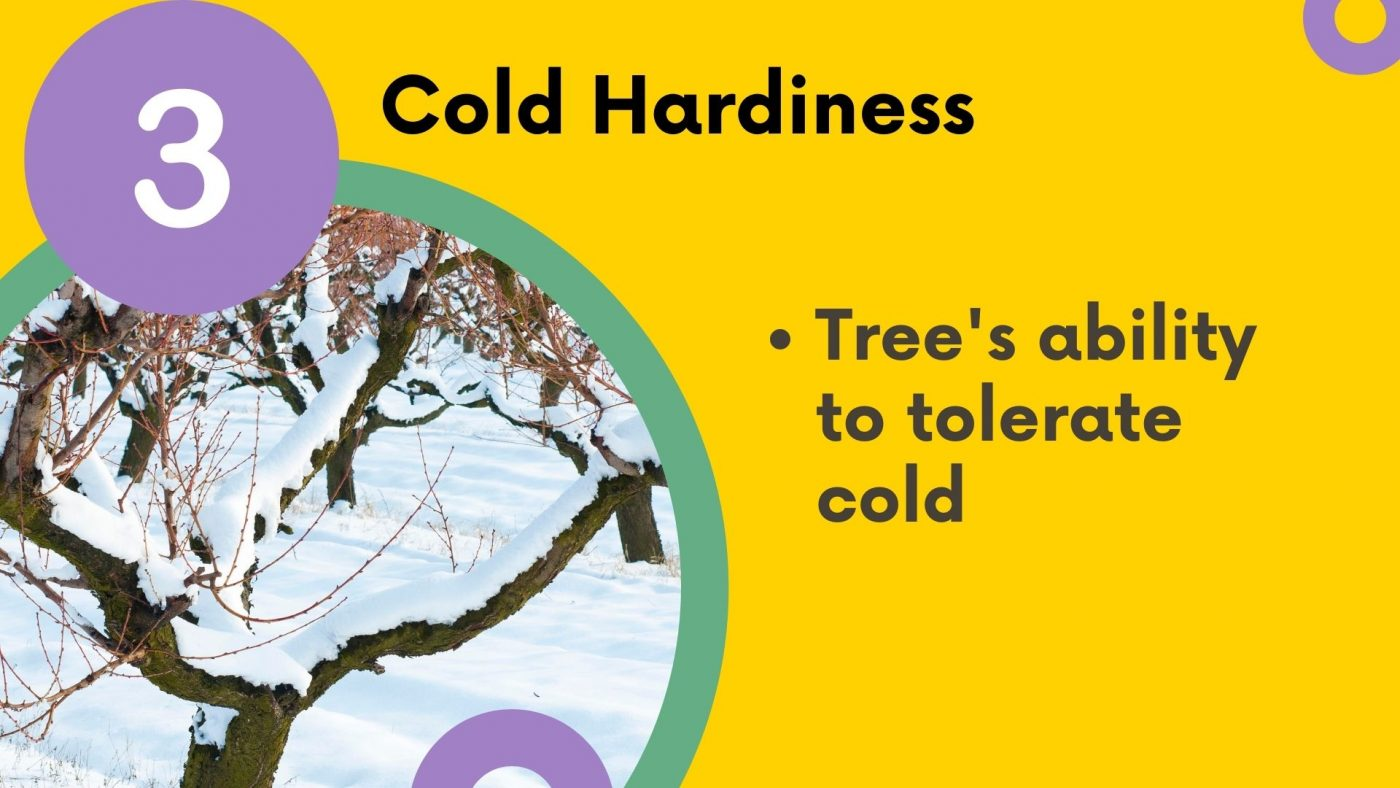 what is a rootstock? Cold hardiness