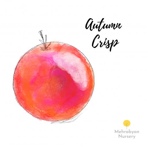 Autumn Crisp Apple Tree