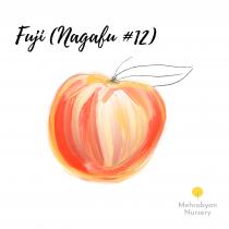 Fuji (Nagafu #12) Apple Tree