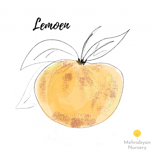 Lemoen Apple Tree