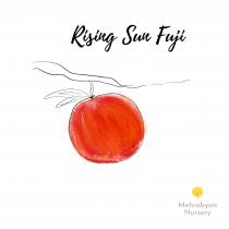 Rising Sun Fuji Apple Tree