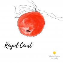 Royal Court Apple Tree