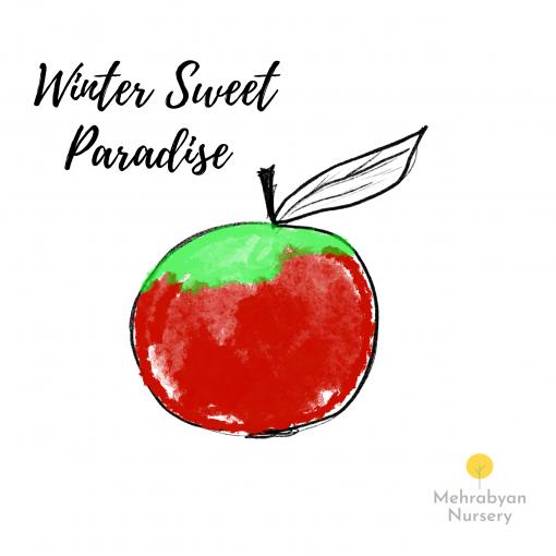 Winter Sweet Paradise Apple Tree