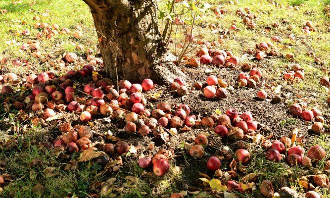 best soil for apple trees