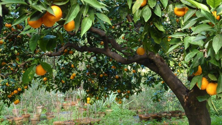 how to select fruit trees
