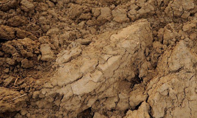 best soils for fruit trees