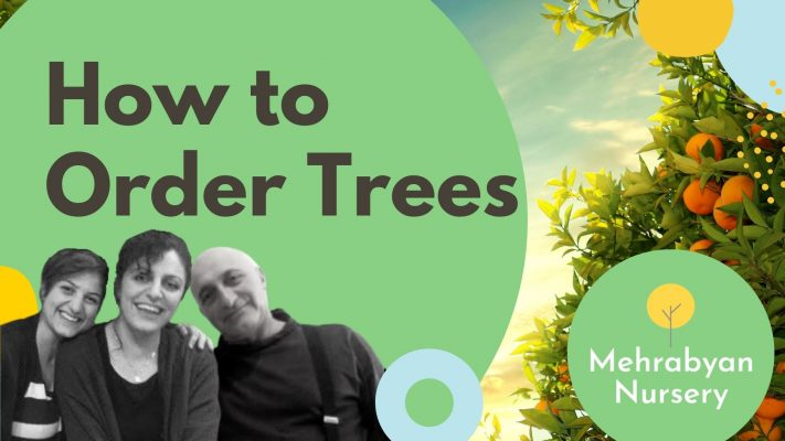 How to Order Fruit Trees Online