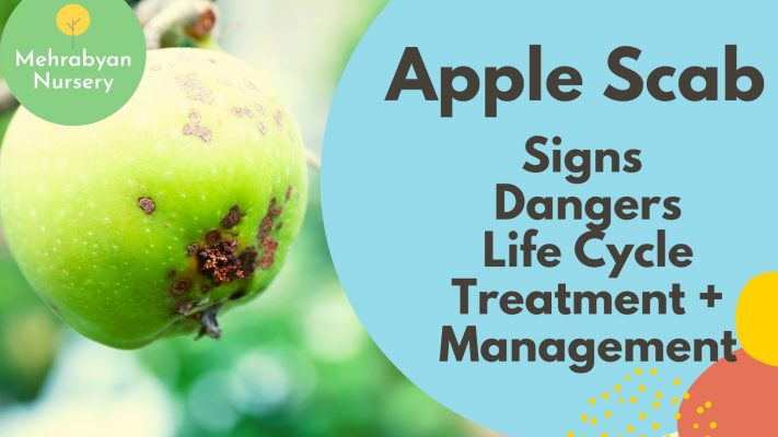 apple scab video