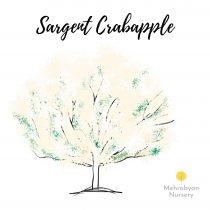 Sargent Crabapple Tree
